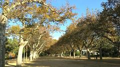 city park (Marlis1) Tags: park trees plantains allee platanen marlis1 tortosacataluñaespaña canong15