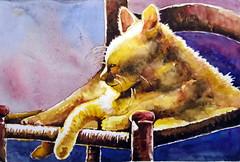 Sleeping cat 01, by Ademar - DSC01564 (Dona Minúcia) Tags: sleeping cute art animal cat watercolor painting paper chair arte inspired study gato tribute homage fofo dormindo pintura cadeira homenagem releitura aquarela inspirado gracinha rereading rachelparker relecture