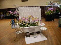 Westerlay Orchids' display (cieneguitan) Tags: flora lan bunga orkid flowershow okid angrek anggerek
