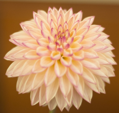 061Dahlia Festival Albuquerque Garden Center September 25.2016 BOS Dick Thompson DSC_85053
