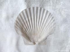 coquilles saint-jacques (Pieter Musterd) Tags: shell schelp coquille coquillesaintjaques stilleven pietermusterd musterd canon pmusterdziggonl nederland holland nl canon5dmarkii canon5d