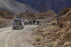 Herding The Family Yaks Murghob Pamir Highway Tajikistan Central Asia (eriagn) Tags: asia centralasia tajikistan murghab pamir mountainous mountains semiarid highaltitude herding herd yaks family nomads seminomadic livestock road dirtroad 4wd horse bicycle geofgraphy geology grass river eriagn ngairelawson ngairehart travel photography murghob summer pamirmountains
