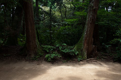 Untitled (Yuta Ohashi LTX) Tags: tree green plant wood shrine japan silence  ibaraki kashima