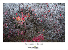 Blueberry Frost (DKNC) Tags: roundbald roanhighlands northcarolina nc tennessee tn frost autumn fall rimeice blueberry leaves red daleking