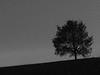287/365: Beim Schlafengehen (Kelvin P. Coleman) Tags: canon powershot nottingham autumn tree silhouette night sky horizon minimalism 365 outdoor bw noiretblanc schwarzweiss blancoynegro longexposure light pollution