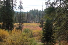 Fall colors in the meadows (rozoneill) Tags: muir creek east fork waterfall meadows rouge umpqua divide wilderness river national forest oregon hiking crater lake park diamond