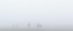 Chevalski Brouillarski (KanteTelemaque) Tags: horses chevaux brouillard mist void vide morning matin saturation pointderosee dewpoint