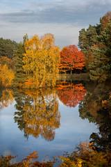 Cannock chase (stevehimages) Tags: autumn colours steve steveh stevehimages wowzers warden west midlands 2016 cannock chase fair oak pool