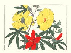 Sunset hibiscus and scarlet rose mallow (Japanese Flower and Bird Art) Tags: flower sunset hibiscus malvaceae scarlet rose mallow coccineus hoitsu sakai kiitsu suzuki kimei nakano nihonga woodblock picture book japan japanese art readercollection