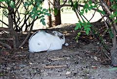 Parque de la Paloma (NataliaRdO) Tags: nature parque rabbit conejo