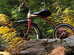 Tricycle Treasure (Professor Bop) Tags: professorbop drjazz olympusem1 vermont tricycle stone trees autumn mosca