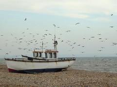 Gulls (JuliaC2006) Tags: dungeness shingle beach coast gulls birds boat
