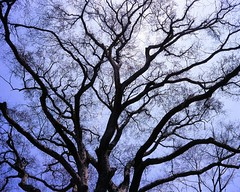 20060429_IMG_0009_trm_mod (NAMARA EXPRESS) Tags: landscape tree gaeden botanicalgarden north fine outdoor color hokkaidouniversitybotanicalgarden sapporo hokkaido japan film fujifilm velvia 100f plaubel makina67 makina nikkor 80mm f28 canon canoscan 9000f scanner scan namaraexp