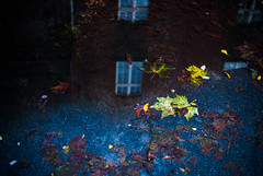 retreat (ewitsoe) Tags: puddle leaves building relfection water nikon dirt odd ewitsoe d80 35mm street city landscpae mirror glass broken