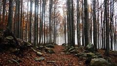 Hiking (filippo casalini) Tags: marmagna lagosanto italy parma hiking lake red trees tree view fog rocks