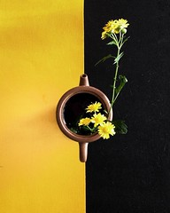 yellow and black, flower and tea  #dailyphoto #iphoneonly #phoneonly #onlyphone #phonegraphy #phonecamera # (Lawrence Wang ) Tags:  yellow black flower tea  dailyphoto iphoneonly phoneonly onlyphone phonegraphy phonecamera