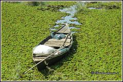 6585 - boat (chandrasekaran a 38 lakhs views Thanks to all) Tags: boat tadoba maharashtra chandrapur tatr tigerreserve jeep safari tiger forest india travel canon powershotsx60hs