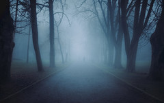 Mysterious Paths (tomasz.cc) Tags: landscape tomaszcc poland photography light moody misty cracow sony a7r2 fog mysterious drama scary