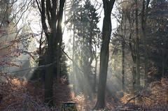 DSC_5473 Ein frostiger traumhafter Morgen im Wald - A frosty gorgeous morning in the forest (baerli08ww) Tags: deutschland rheinlandpfalz germany rhinelandpalatinate westerwald westerforest wald forest frost landschaft landscape licht light raureif hoarfrost nebel mist natur