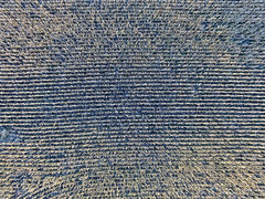 Rows on the field (John Rothwell) Tags: n kent county michigan fall nature colors drone arial farm chauncy corn harvest