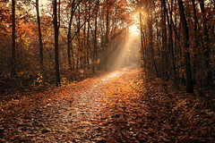 The Path to Enlightenment (parkerbernd) Tags: path enlightenment red autumn leaves fall woods forest sunbeams sunrays spotlight oak trees fog mist november lumix gx1 brandenburg germany explore divine