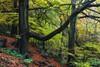 Padley.... (klythawk) Tags: autumn nature leaves rocks fern damp green orange brown yellow grey black olympus em1 omd 1240mm padleygorge peakdistrict derbyshire klythawk