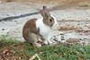 IMG_3821 (Ethene Lin) Tags: 初鹿牧場 兔 台東