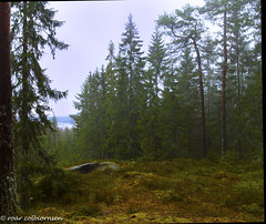 Jeg gikk en tur i skogen (FotoRoar2013) Tags: 2016 fotoroar2013 winter weather woods atmosfre atmosphere atmosfera atmosphre canon colorfull color colors colores couleurs colori hst interesting landscape landscapes moody norway norwegen noruega norge norvegia nature natur norvege norwege outdoor photography rc trees tre tree vinter