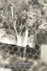 "Spoon River Anthology Davis Matlock (claudionimuc) Tags: spoonriver edgarleemasters america selenio seppia crema poesia morti fernandapivano pivano antologia de andre"" pavesi 2016 art rural"