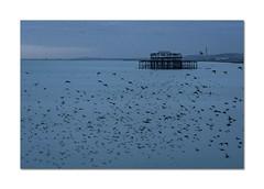 46/52: Recreate a famous photo (Explored) (hehaden) Tags: pier westpier ruin sea birds starlings murmuration brighton sussex 52photos2016