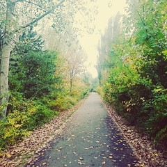 Walk the line (TravelCoupleLove) Tags: autumn leaves trees green selfmade life live sony kamera art kunst photography fotografie spaziergang walk line herbst bltter bume fun grn