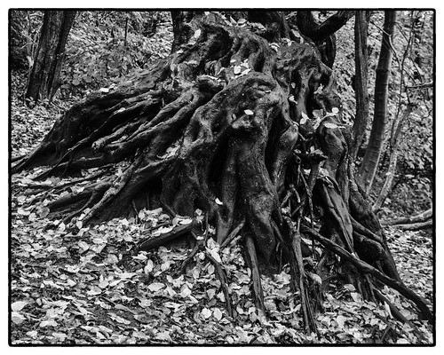 Around The Root II | Schleswig