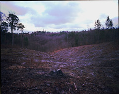 Logging (kubawojciechowski) Tags: forest woods pentax takumar 55mm epson medium format 6x7 67 perfection v800