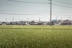 Biwakoguma: Osaka to Tokyo (Lee Basford) Tags: road japan cycling tokyo osaka rapha repotage