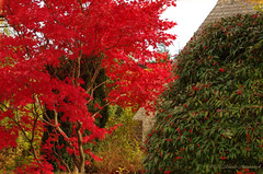 Tervuren (Natali Antonovich) Tags: autumn nature belgium tervuren pensiveautumn