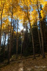 A glint of sun through the fall foliage