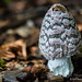 """2015_Champignons_Tervuren-65 • <a style=""""font-size:0.8em;"""" href=""""http://www.flickr.com/photos/100070713@N08/21850137921/"""" target=""""_blank"""">View on Flickr</a>"""
