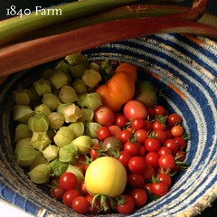 "October garden harvests make me so happy. This morning, I found ripe heirloom tomatoes, husk cherries, sheepnose peppers, and rhubarb waiting for me. I hope that our temperatures will allow us to keep enjoying fresh produce a little while longer. Fingers • <a style=""font-size:0.8em;"" href=""http://www.flickr.com/photos/54958436@N05/21922170359/"" target=""_blank"">View on Flickr</a>"