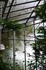 DSC_1603edit (Sarah Greyy) Tags: blackandwhite plants white black colour green abandoned overgrown sarah contrast photography photo nikon highcontrast greenhouse ruleofthirds sarahgrey sarahgreidanus