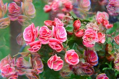 "Playing with a ""magic filter"" (bettyinparis) Tags: flowers autumn garden nikon magic filter filters d3200"
