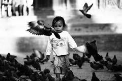 Au dtour d'une rue de Katmandou (Aliz 84) Tags: pigeons npal photoderue katmandou