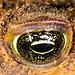 Close up of aToads eye