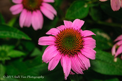 Pink (AndiVanPhotog) Tags: closeup photography nikon streetphotography nikond300s atlantaartsfestival2015