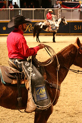 RAWF15 JSteadman 0125 (RoyalPhotographyTeam) Tags: sun royal rodeo 2015 rawf nov08