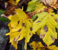 Herbst (wpt1967) Tags: autumn fall leaf herbst blatt blätter canon50mm castroprauxel eos60d wpt1967