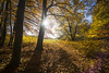 Autumn at Entenberg N°4 (Bernhard_Thum) Tags: wood autumn nature franken nationalgeographic carlzeiss thum leicam elitephotography alemdagqualityonlyclub capturenature daarklands distagont2815 entenberg bernhardthum distagon1528zm
