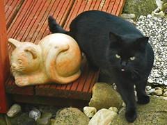 IMGP0673 (d_fust) Tags: cat kitten gato katze  macska gatto fust kedi  anak katt gatito kissa ktzchen gattino kucing   katje     yavrusu
