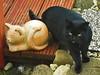 IMGP0673 (d_fust) Tags: cat kitten gato katze 猫 macska gatto fust kedi 貓 anak katt gatito kissa kätzchen gattino kucing 小貓 고양이 katje кот γάτα γατάκι แมว yavrusu 仔猫 का बिल्ली बच्चा