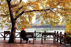 Seoul: Songpa Naru Park (Seoul Korea) Tags: park city autumn fall asian photo asia capital korea autumnleaves korean photograph seoul kr southkorea   kpop  republicofkorea canoneos6d flickrseoul sigma2470mmf28exdghsm seochonlake songpanarupark