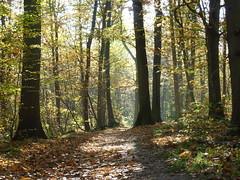 forêt d'automne (~Louna~) Tags: wood autumn automne fairy fée forêt